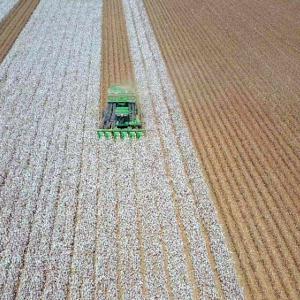 Cultivo algodón
